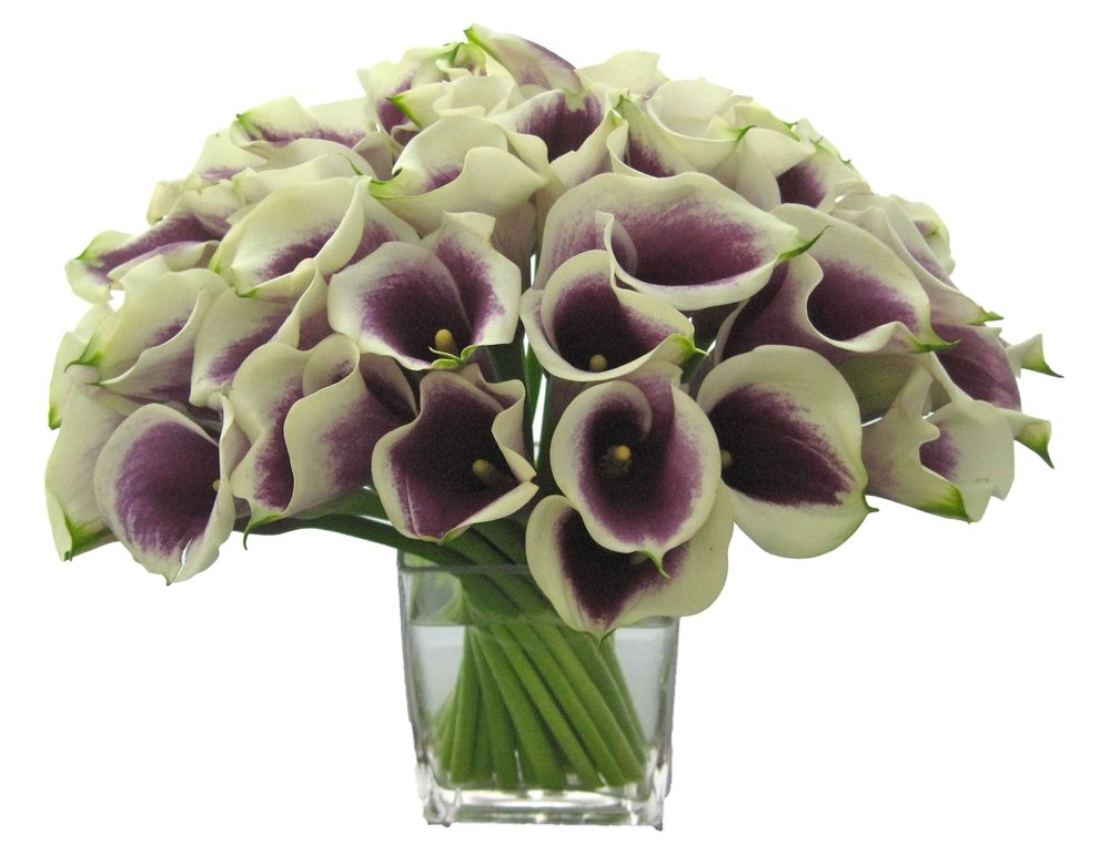 Picasso Callas start at $275