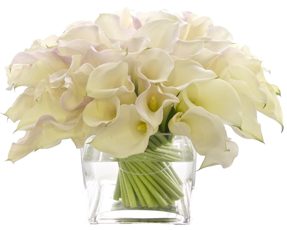 White Callas from $250
