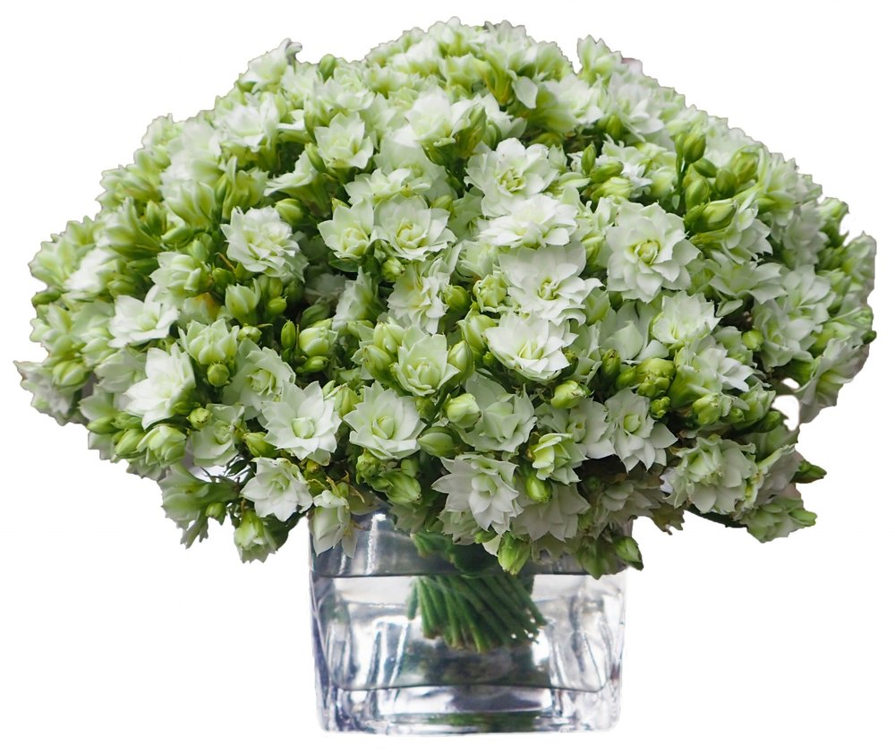 Kalanchoe from $150