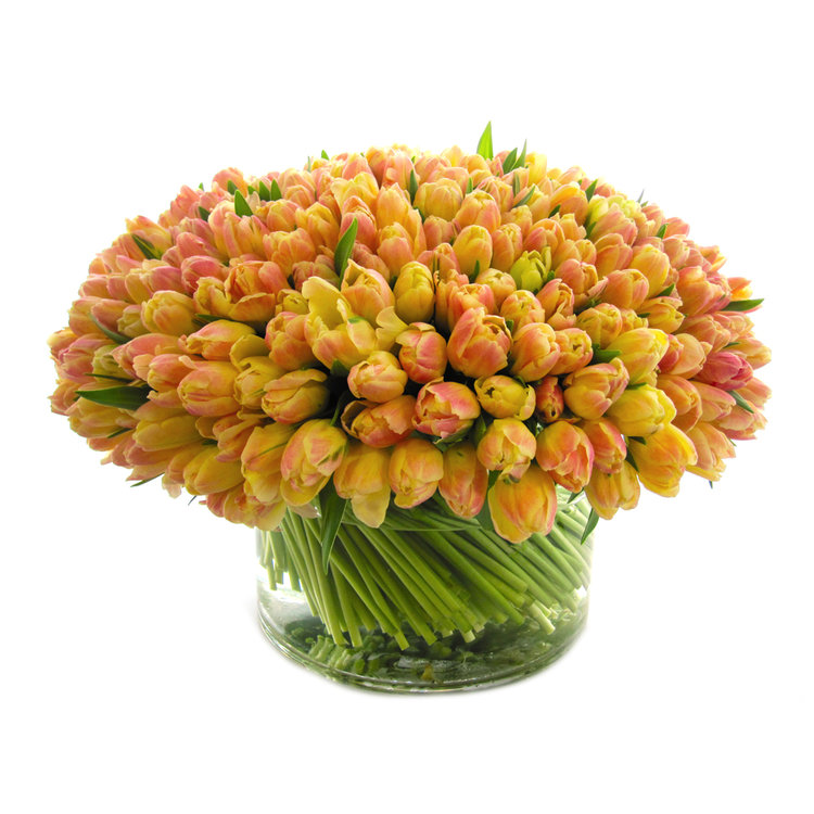 Luxe Libretto Tulips, from $375