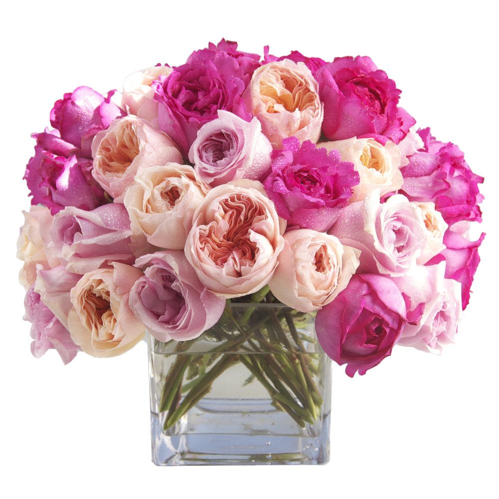 Pink Garden Rose Mix