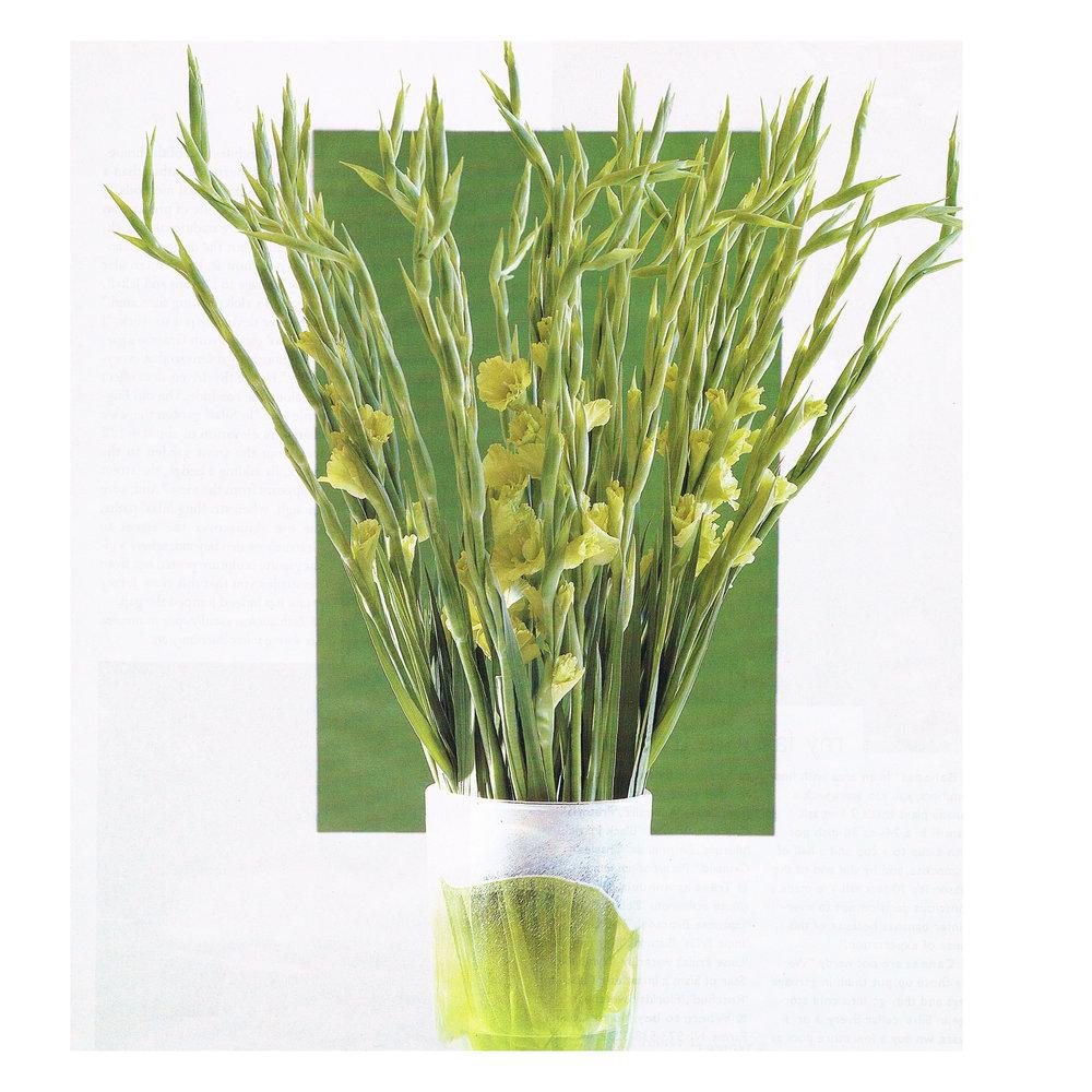Green Gladiolus