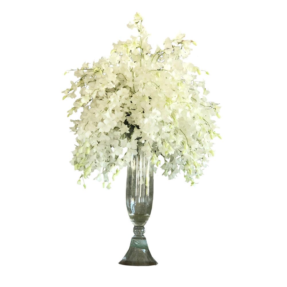 Hawain Dendrobium