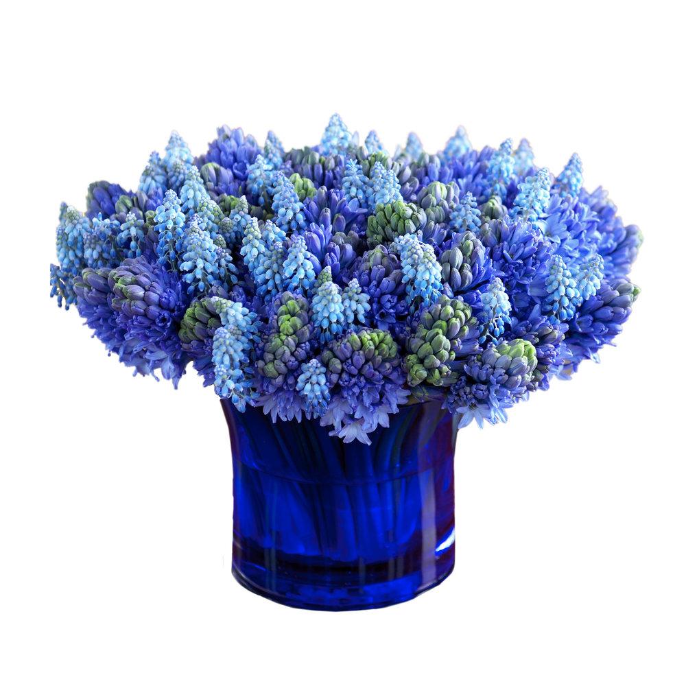 Muscari Hyacinth Blend - Spring