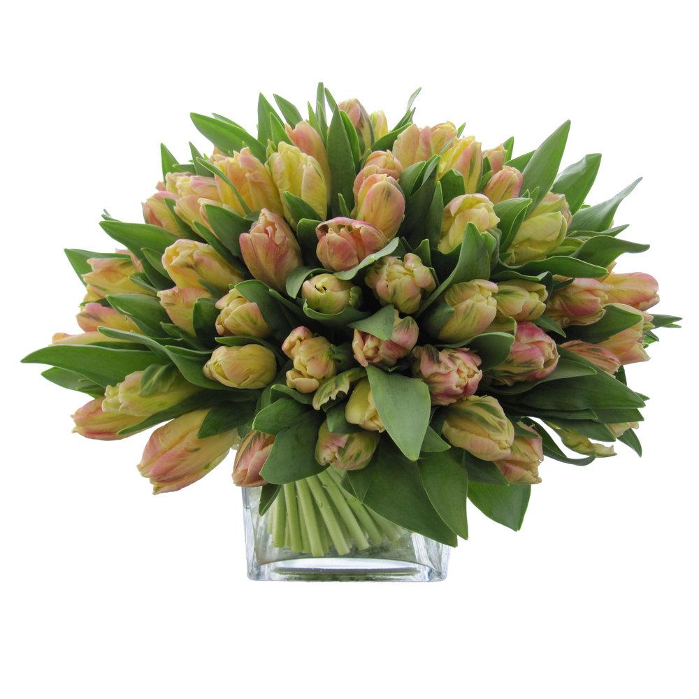 Libreto Parrot Tulips