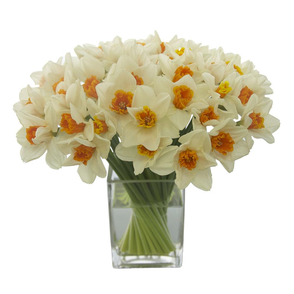 Orange Mouth Daffodils