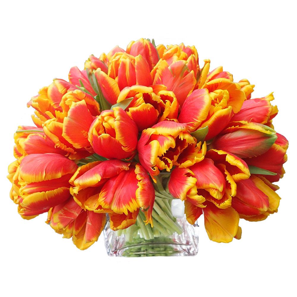 Yellow-Orange Tulips