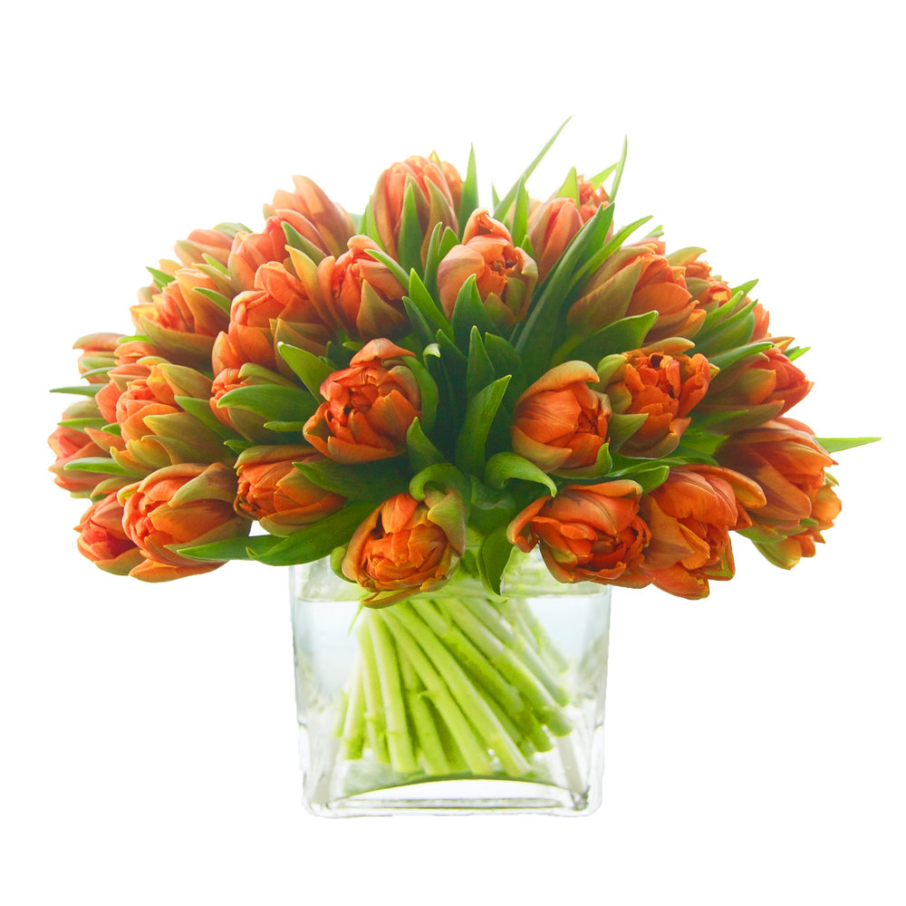 Orange Double Tulips