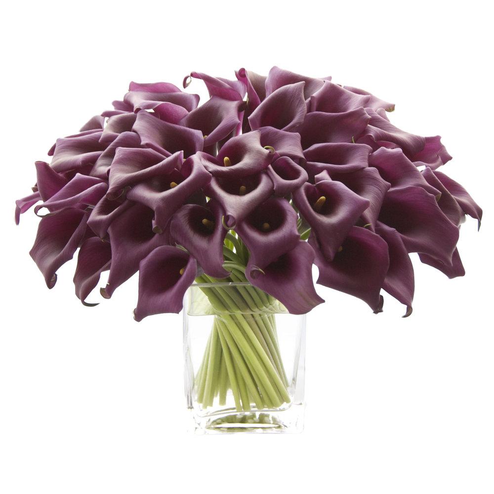Eggplant Callas