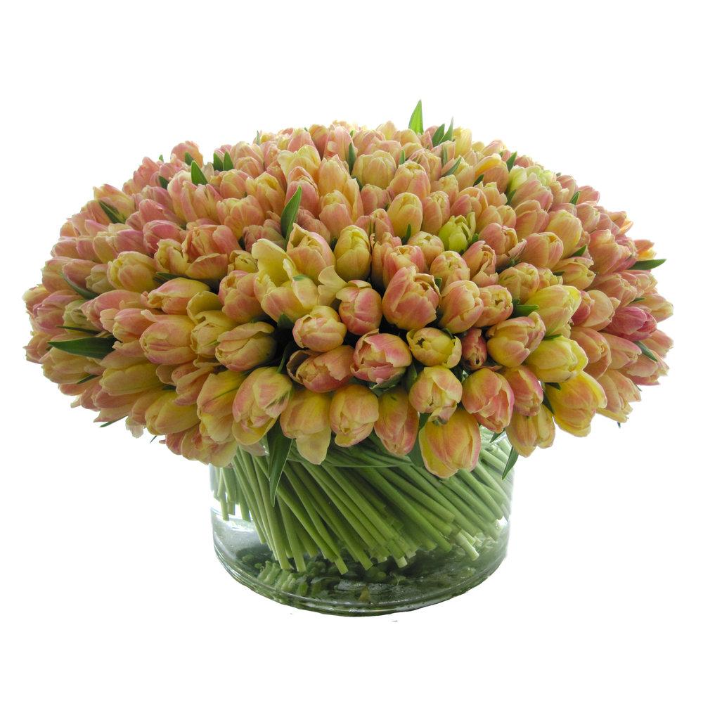 Luxe Tulips