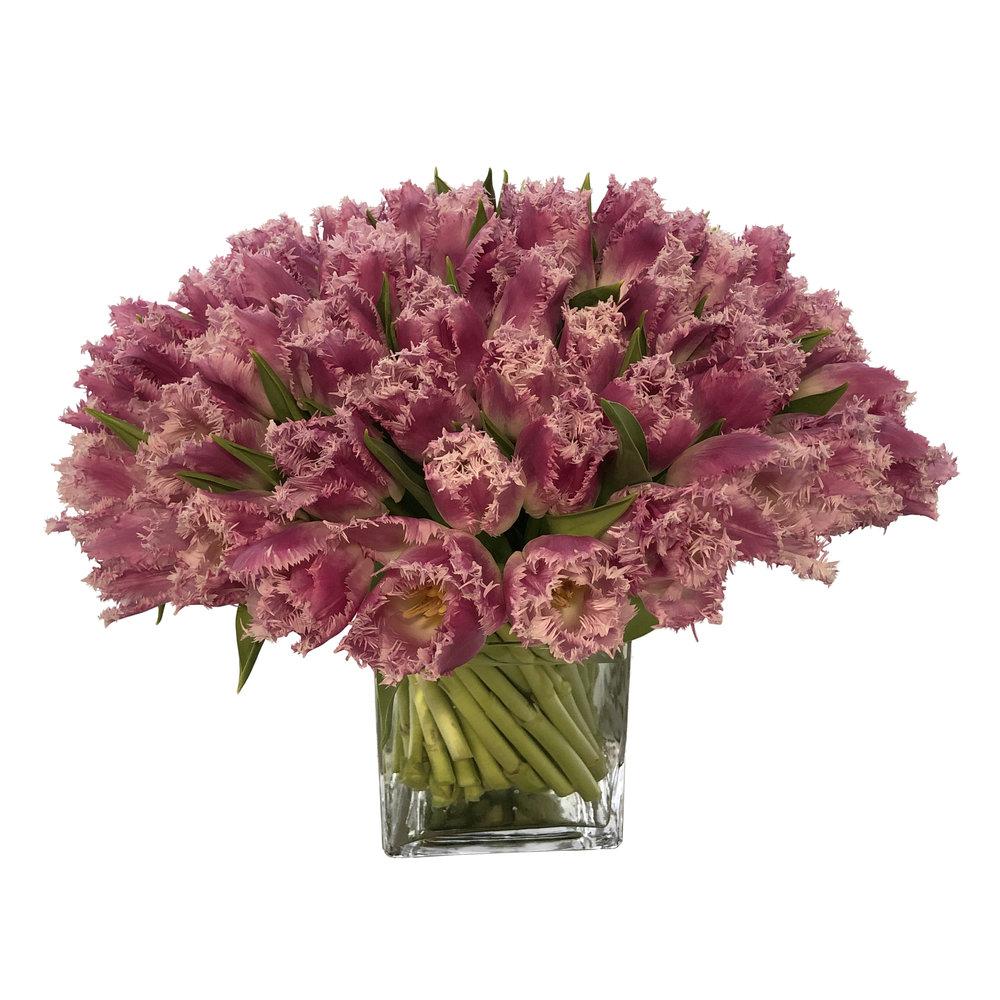 Lavender Fringe Tulips