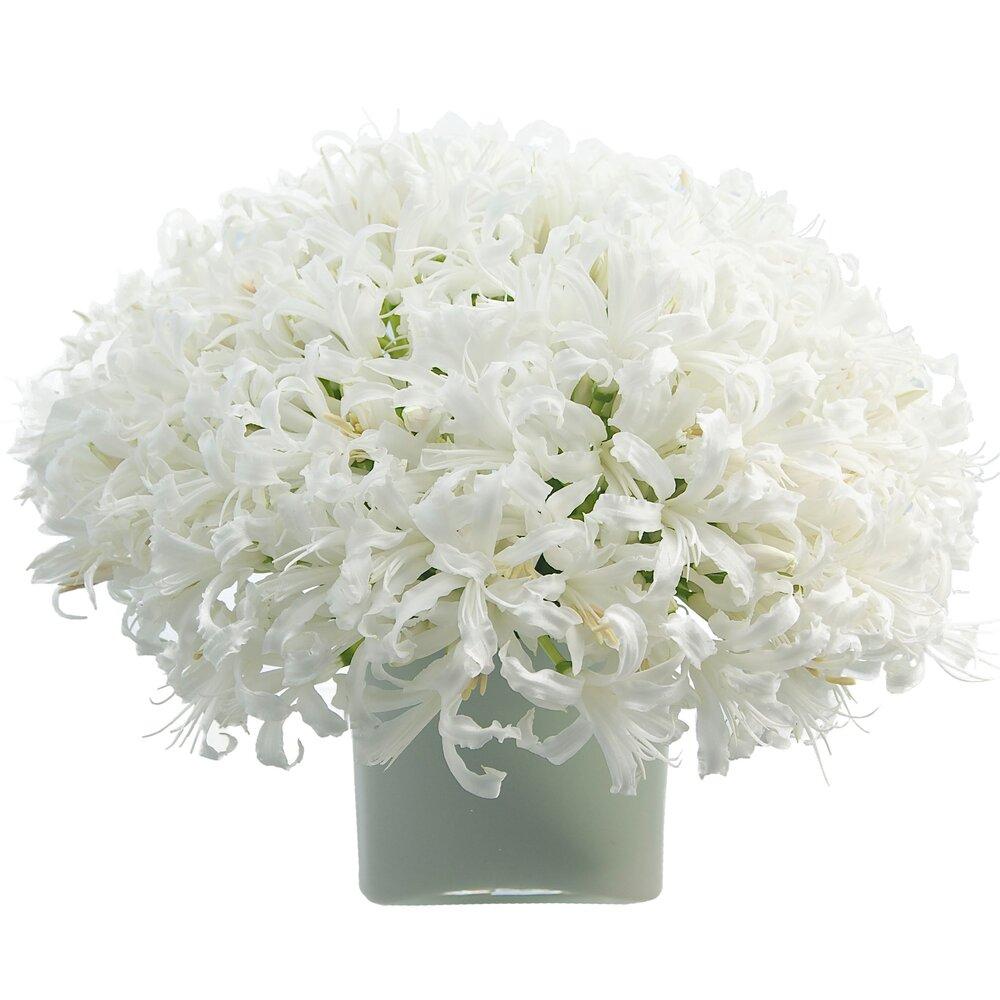 White Nerine