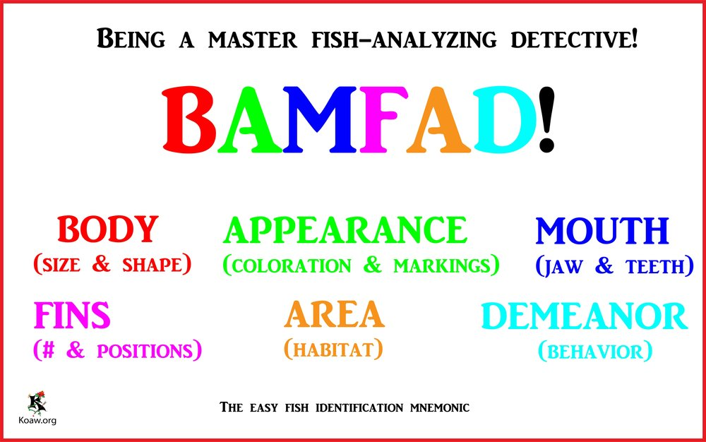BAMFAD Koaw_org