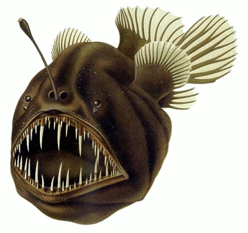 Melanocetus johnsonii  - humback anglerfish; this fish has been found in depths up to 4,500 meters and is normally above 1,500 meters.  Notice the small eyes.   Cite: US Public Domain August Brauer (1863–1917): Die Tiefsee-Fische. I. Systematischer Teil.. In C. Chun. Wissenschaftl. Ergebnisse der deutschen Tiefsee-Expedition 'Valdivia', 1898-99, 1906