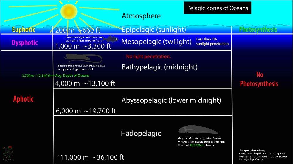 Pelagic Zones of Oceans by Koaw