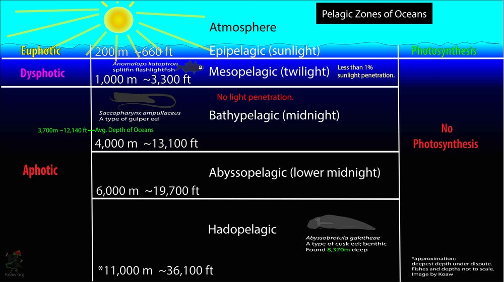 Graphic displaying the official (epipelagic, euphotic, etc.)and unofficial (twilight, midnight, etc.)names of the pelagic zones in oceans.  CLICK ON THE IMAGE TO ENLARGE