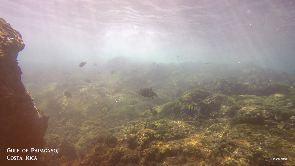 Reef, some beauties while free-diving