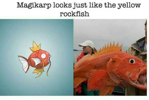 Magikarp compared to yelloweye rockfish - nope, sorry buddy.