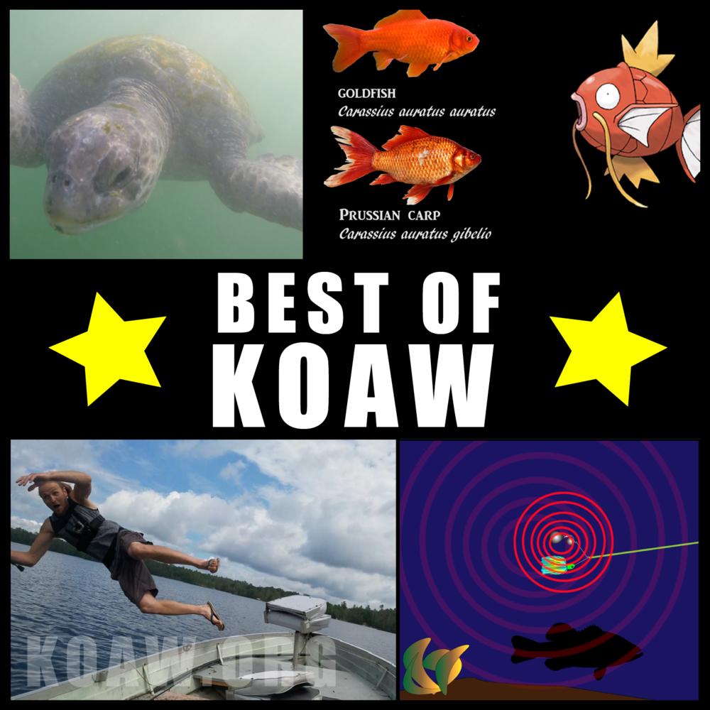 best of koaw koaw org.png