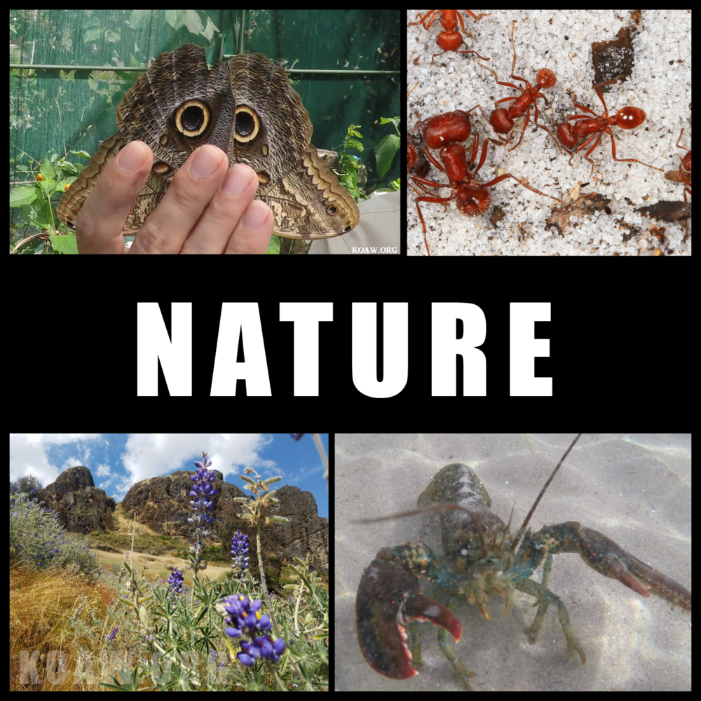 nature koaw org.png