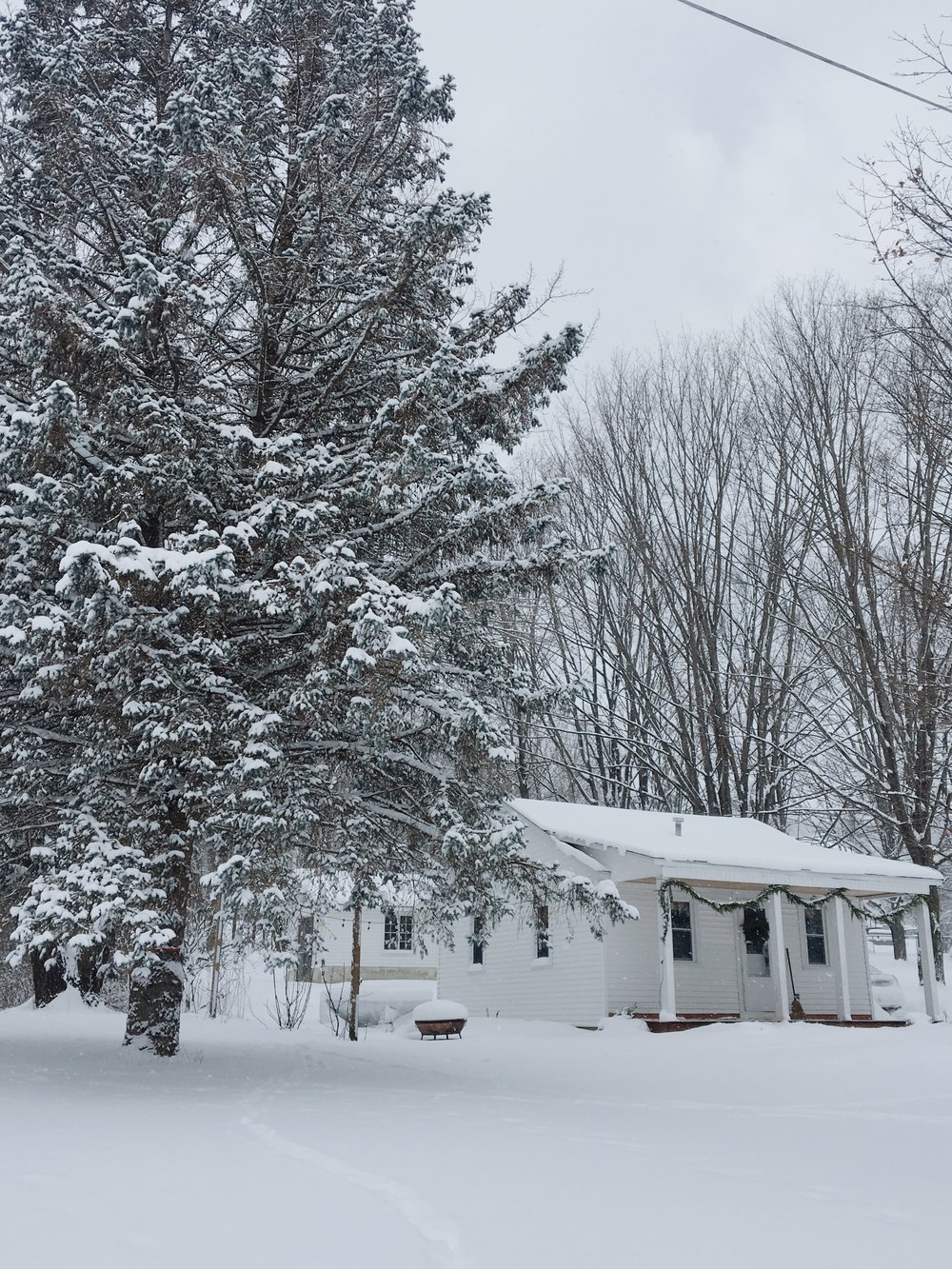 A snow covered small cabin in Northern Michigan in winter with large pines covered in snow