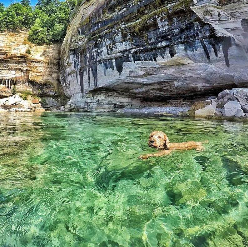 Dog swimming in Lake Michigan