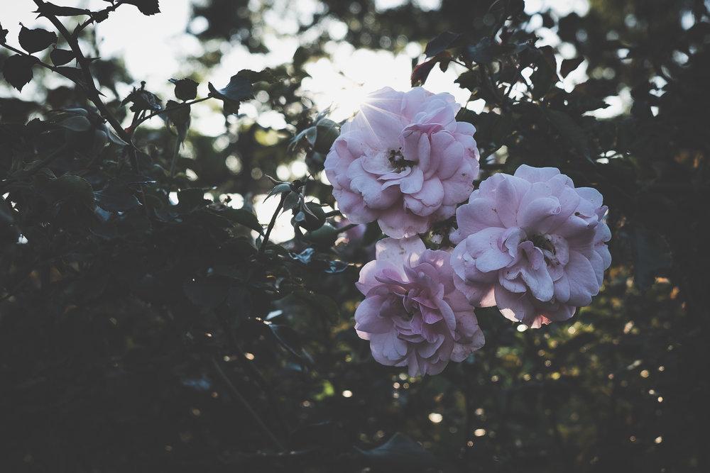 FlowersChristopherColumbusPark_100217_4x6.jpg