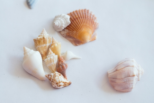 small shells from Florida