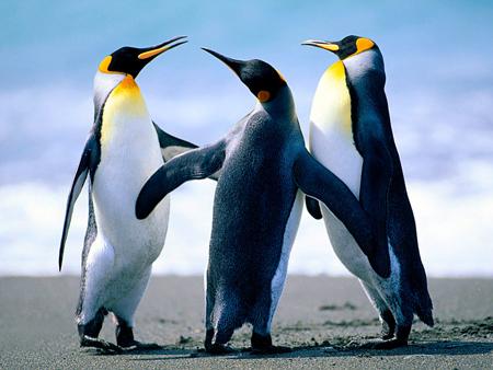 penguin3-300x225.jpg