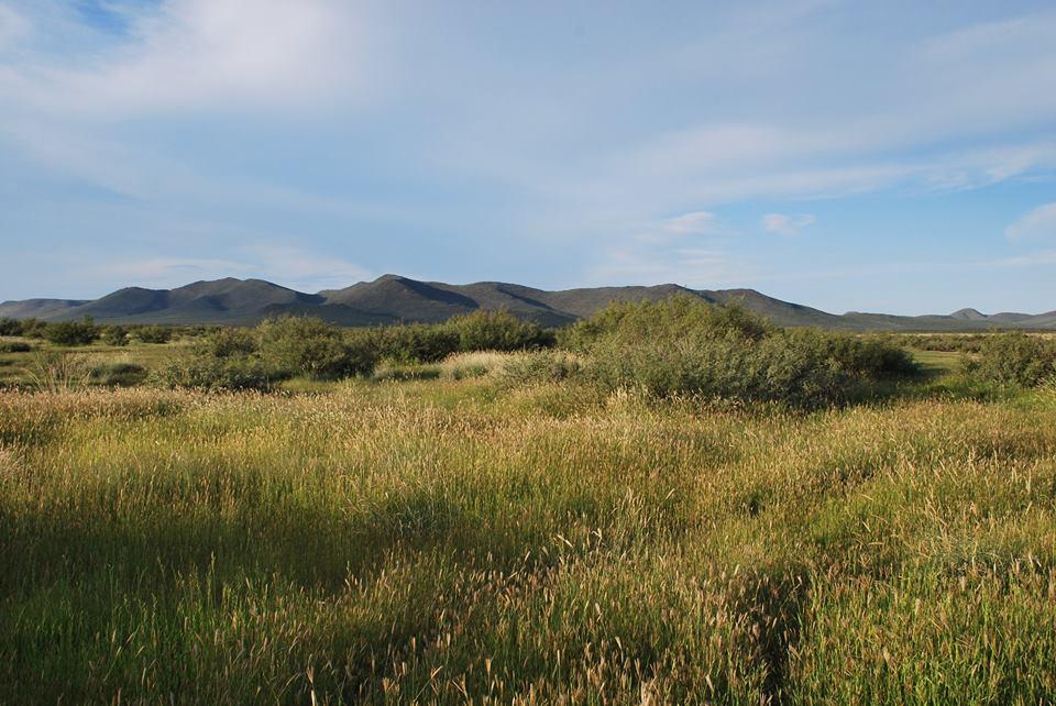 Toboso prairie  (Sept 2014)