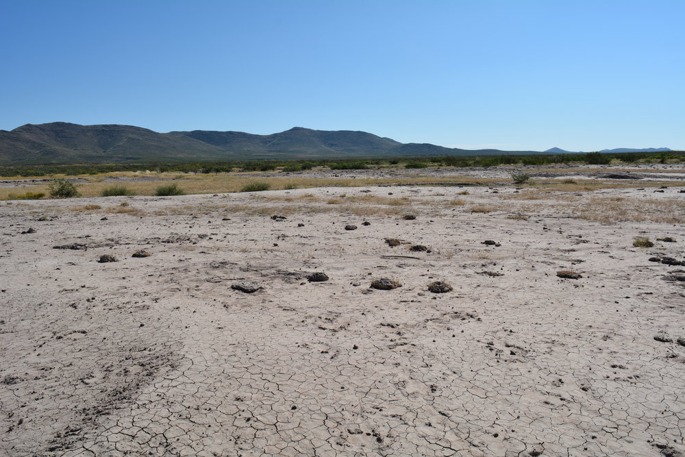 Bare area where cattle slept & dung
