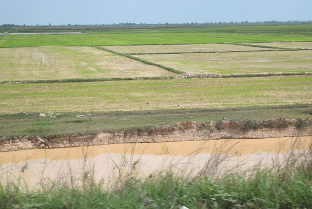 Rice paddies along the road -- as far as the eye can see.