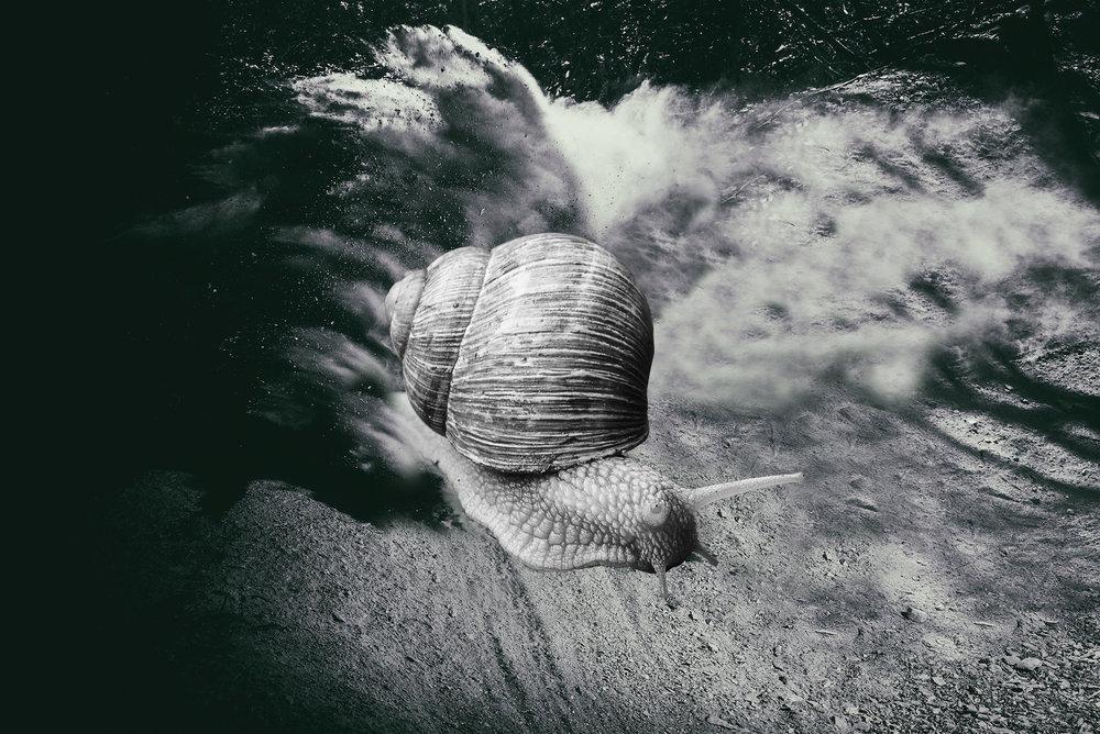 Snail Trail Rehab.jpg