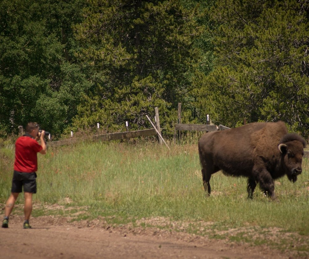 Dave and the buffalo-1.jpg