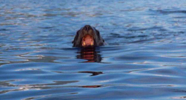 Sea Lion - Sitka, Alaska - see the story behind this photo under 'Stories Behind the Photos' section