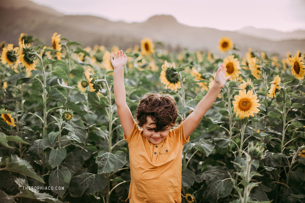 waialua-sunflowers-oahu-family-photography-01.jpg