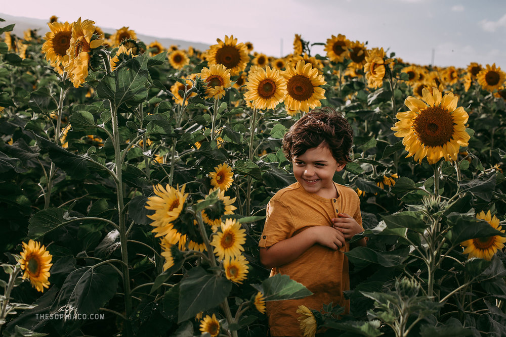 waialua-sunflowers-oahu-family-photography-08.jpg