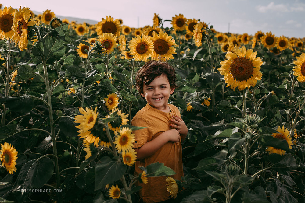 waialua-sunflowers-oahu-family-photography-07.jpg