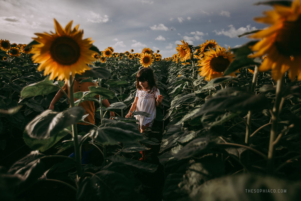 waialua-sunflowers-oahu-family-photography-13.jpg