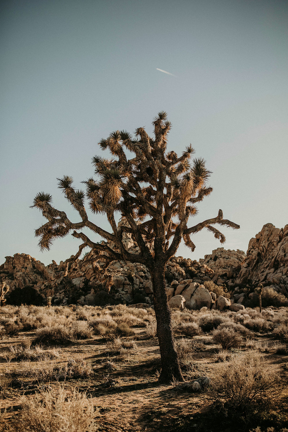 Joshua-Tree-Travel-Photographer-Self-Portraits-11.jpg