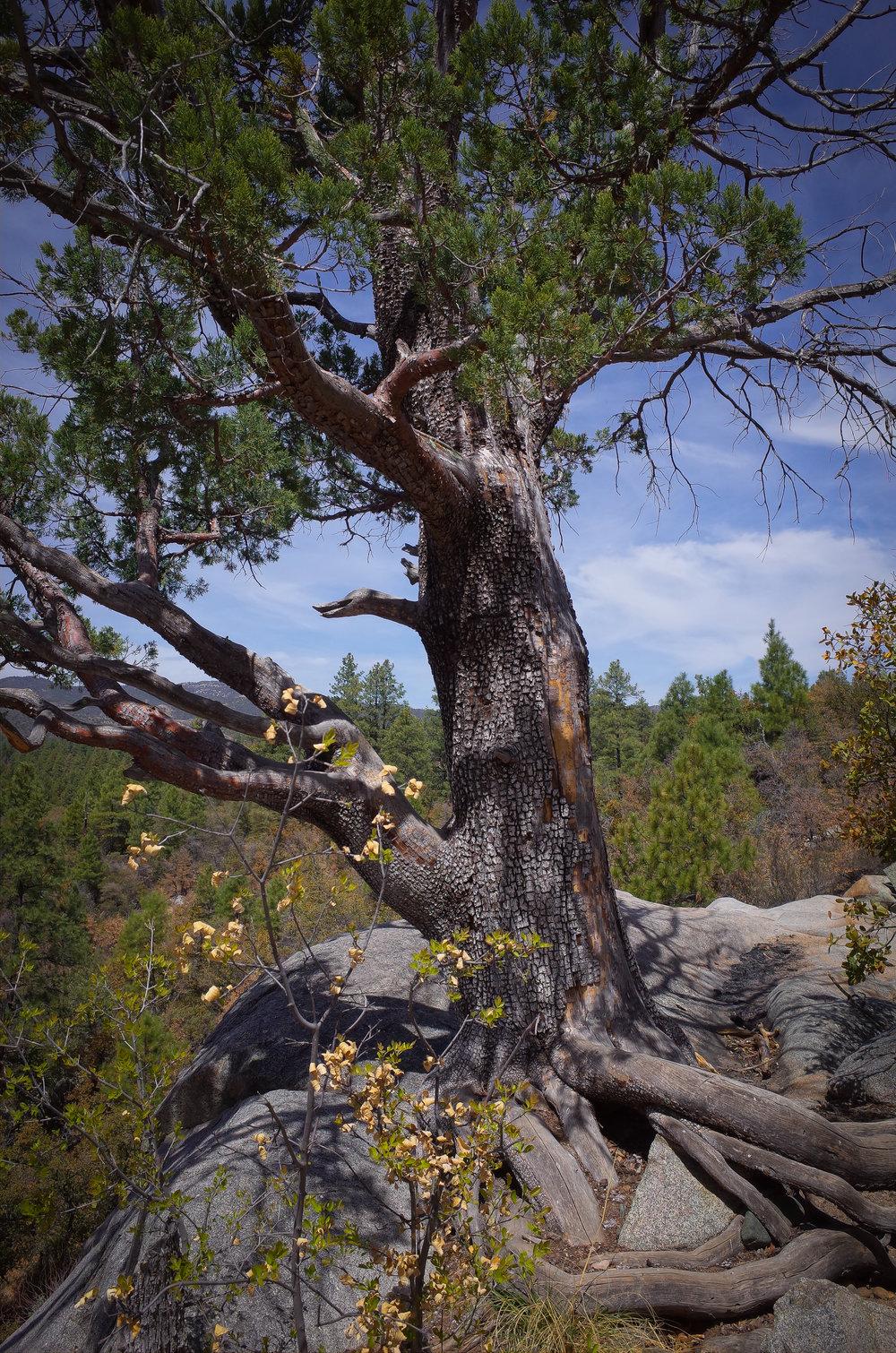 Wolf Creek Falls 2 - Jia Oak Baker.jpg