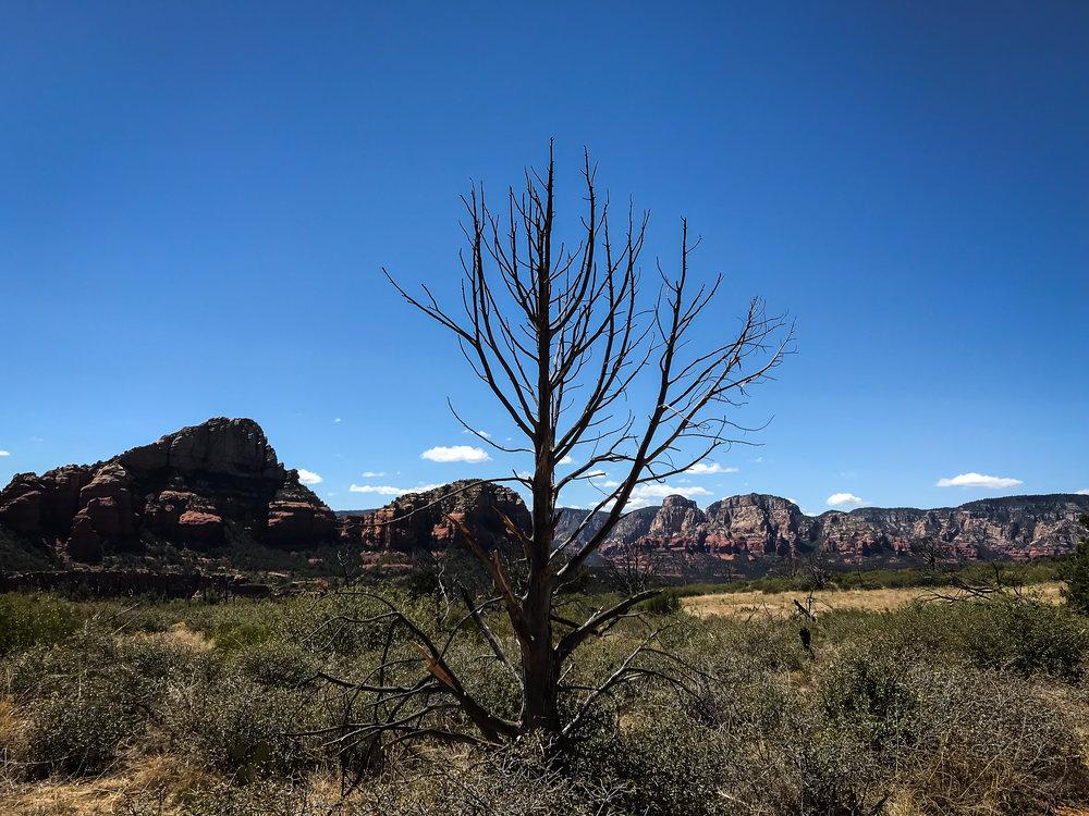Brins Mesa 5 - Jia Oak Baker.jpg