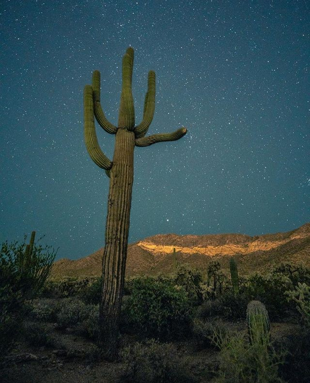 What a beautiful Saguaro Sunday it was 😍 #📷 @akali_photos . . . . #letskeepitwild #arizona #visitarizona #arizonacollective #explorearizona #instagramaz #hikeaz #arizonahiking #igsouthwest #explorearizona #discoverarizona #optoutside_project #beon12 #artofvisuals #wildernessculture #igsouthwest #devine_deserts #weroamarizona #arizonahiking #arizonaphotographer #arizonalife #exploreaz #azculture #az365 #getoutside #rei1440project #divine_deserts