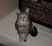 Kentucky cat.jpg