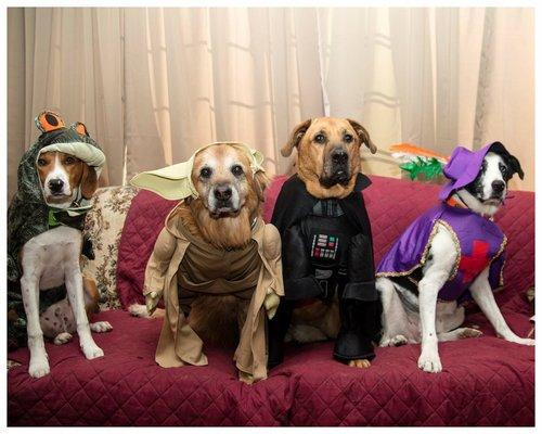 Events pet club photo contest solutioingenieria Images