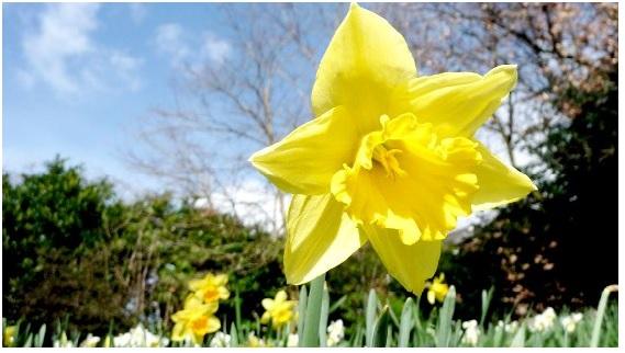 Obtén hganancias adicionales este mes de marzo