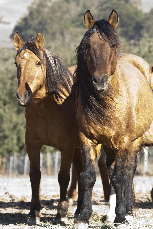HORSEy10.jpg
