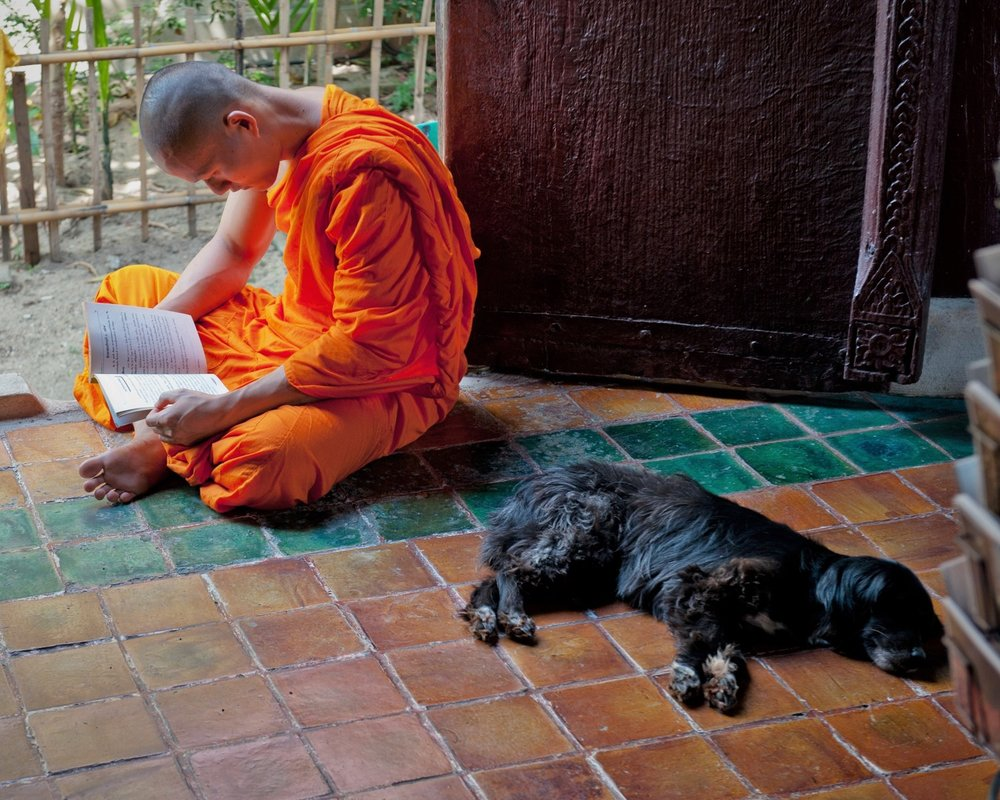 Monk studing sutras, Chaing Mai, Thailand