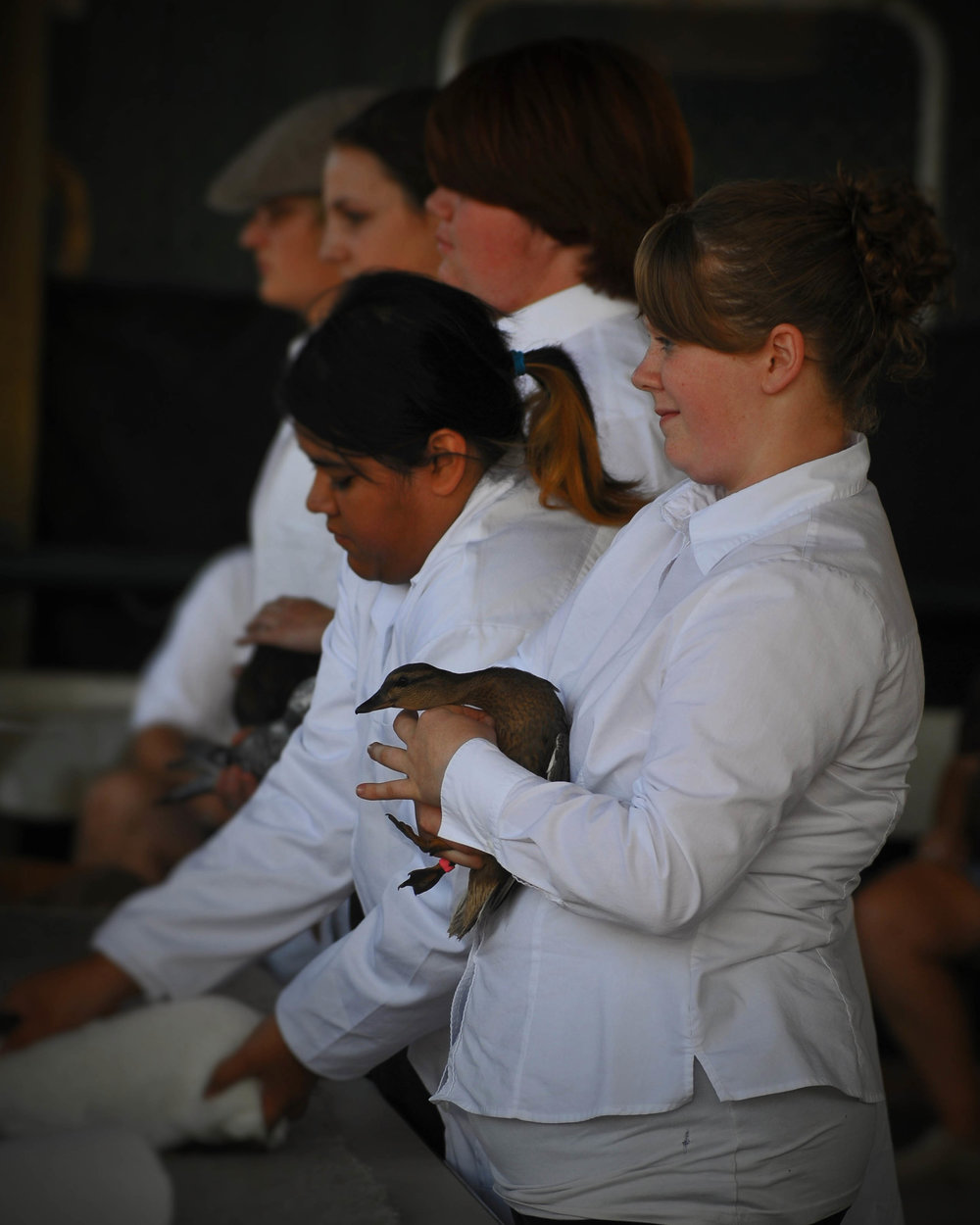 4H - pet showing, Snohomish County Fair, Wa