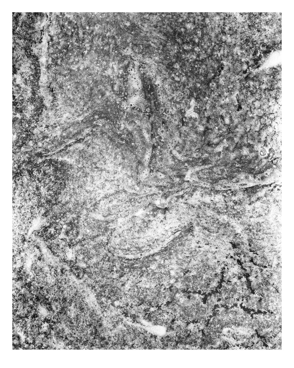 20170123_winter_008e2print.jpg